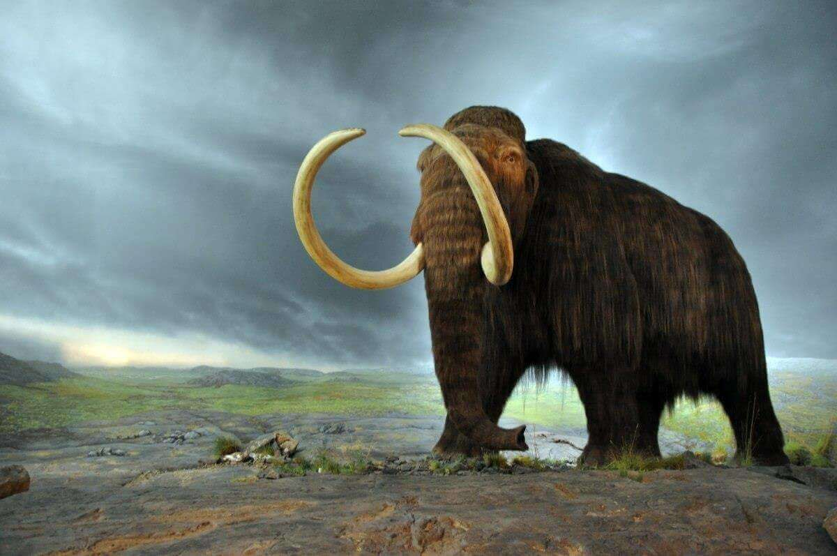 Mammoths of Wrangel Island