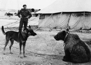 Private Wojtek, the soldier bear, meets a new friend.